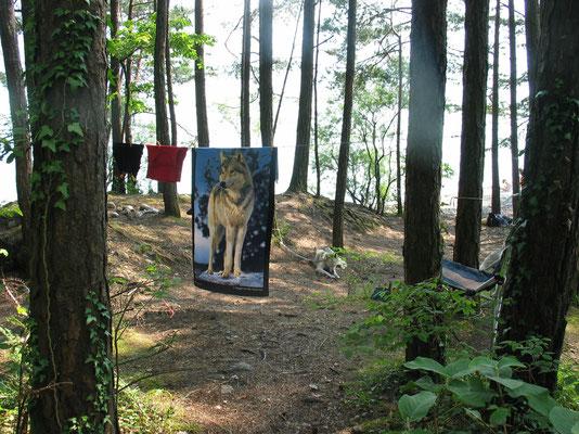 Husky-Wochenendcamp am See
