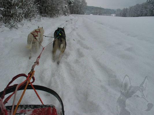 Dieser Winter bringt ein wunderbares Erlebnis: So viel Schnee, dass wir zu Hause anspannen und eine Tour mit dem Schlitten machen können.