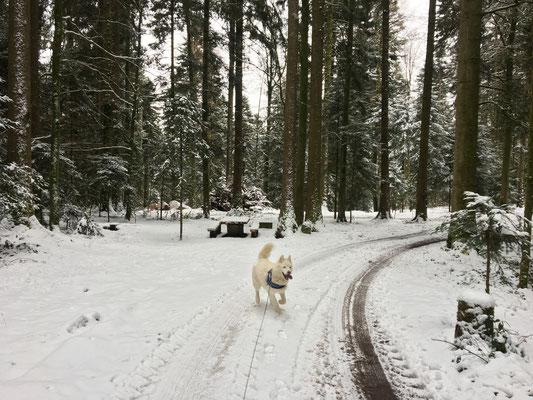 Durch den verschneiten Wald, ganz leise, auf pelzigen Sohlen, und all die feinen Gerüche einatmen...