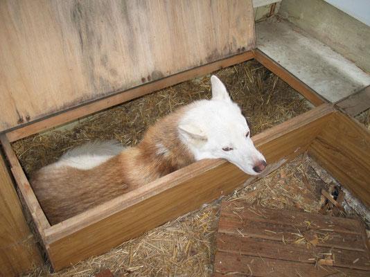 Chenook; Im Schlafwagen der Huskypost nach Alaska!