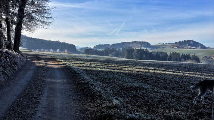 Bergwald, Richtung Mühleweg