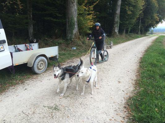 Weil sie so verlässlich sind, die beiden Oldies Snow und Skeena, kann Noemi mit ihnen am Scooter schon alleine unterwegs sei; einen Kilometer noch und in gemächlichem Tempo.