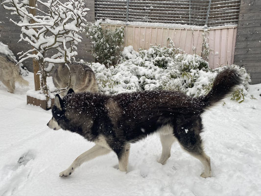 1.12.2020; der erste Schnee in dieser Saison