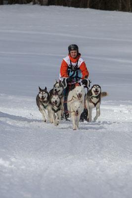 An einem Happydog-Schlittenhunderennen in Kandersteg. Es gab nichts zu gewinnen als die Ehre, mitgemacht zu haben, und das ist voll gelungen.