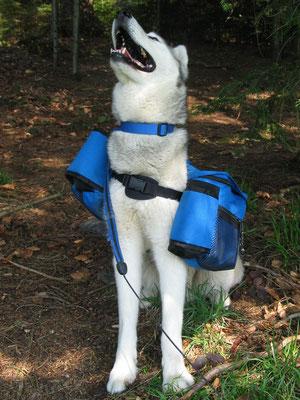 Trekking mit Packtaschen