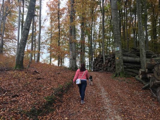 Nicole-Frauchen durch den Herbstwald ziehen - kein Problem, sie will es so.
