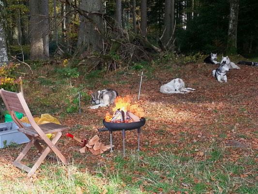 Derweil macht Herrchen schon mal ein Feuer, es soll nachher ein Waldfondue geben...