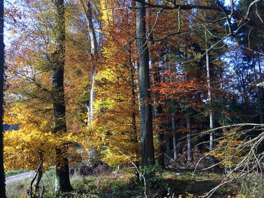 Der Herbst ist eine Jahreszeit die weh tut, in all seiner Farbenpracht.