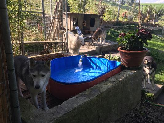 Neues Quellwasser vom Oeschenbach wird eingelassen.