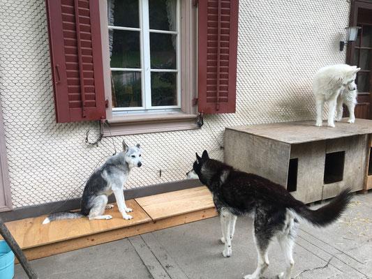 Hallo ihr, was macht ihr denn da? - Oh, habe ich was verpasst? Hey Zwerg, darf ich mal schauen?