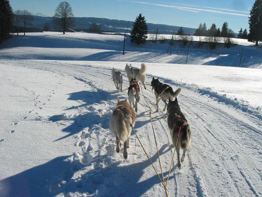 Snow führt sein Team in flottem Tempo über den Trail in Tramelan; gleich wird es in ein steiles Tobel gehen...