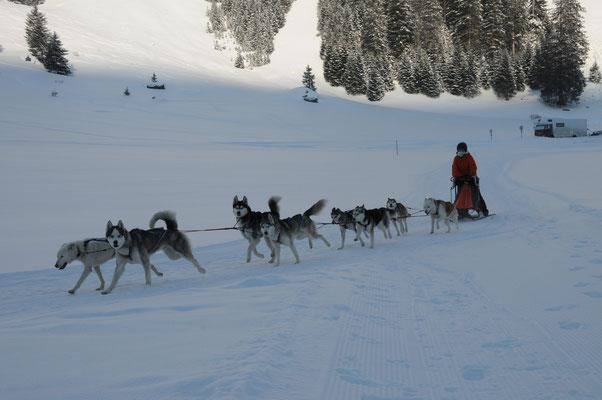 Mit meinem Achter-Gespann Nothilfehunde auf dem Trail Urnerboden (Foto B. Müller)