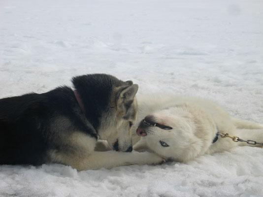 Kuschelige Momente sogar im Schnee; Borea und Blizzard