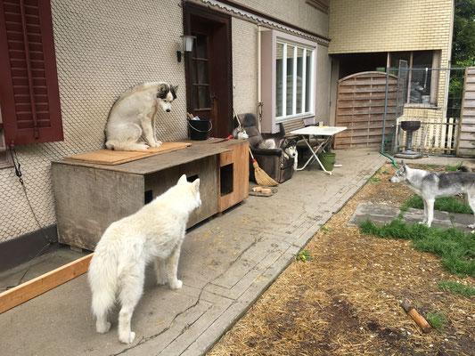 Yukon setzt sich schon mal auf die Holzplatte - hat da in der Breite mein Hintern auch wirklich Platz?