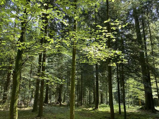 Frühling im Bergwald