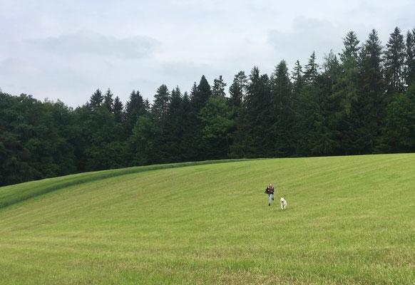 wildem Jagen über abgemähte Felder.