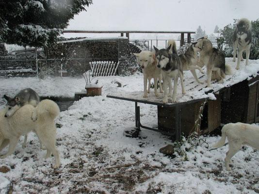 Sehr früher Wintereinbruch Ende Oktober; für die Pelzfreunde ein Riesenfest