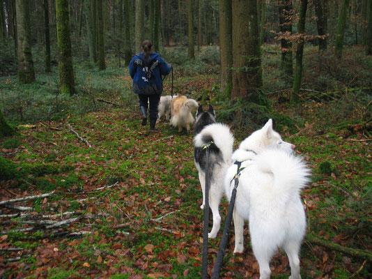 Auf Pilzsammeltour quer durch den Wald