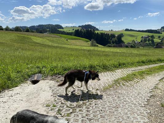 16 Jahre, 9 Monate und 4 Tage; ich ziehe mit meinem Zwerg über den Berg. (Frauchen hat uns aber mit dem Auto hinauf gefahren)