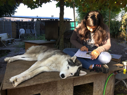 """Tombé, retourné und tiré, ist Noemi am Französich lernen, für Yukon tönt das nur nach fremden Sternen. Einzig """"tiré"""" glaubt er irgendwie zu kennen; macht man das nicht an den Schlittenhunderennen?"""