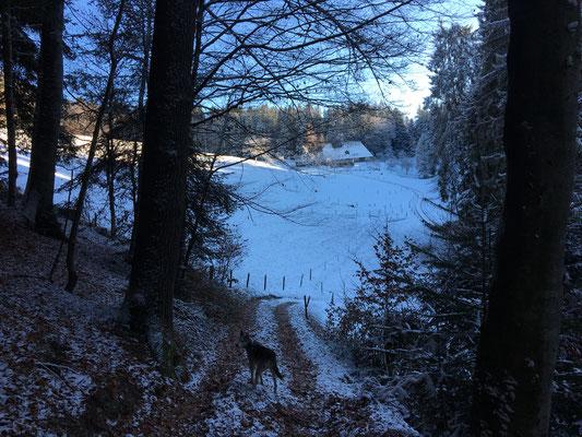 """Der Weg führt uns unterhalb des Hofes """"Oberkleinhaus"""" vorbei und sofort wird es ein paar Grade kälter. Die Welt ist erstarrt in blau-weiss-grauem Frost."""