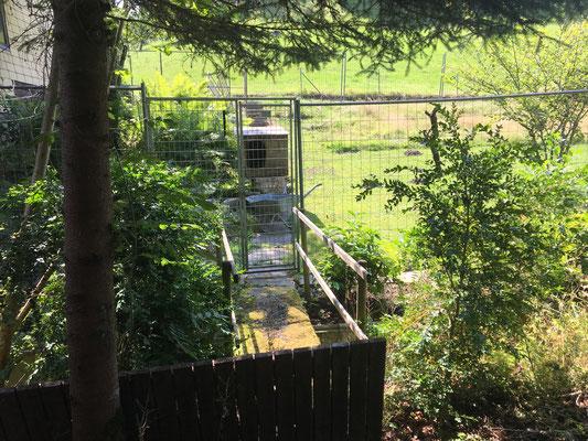 Über die Brücke - ein idyllischer Zugang zum Gehege.
