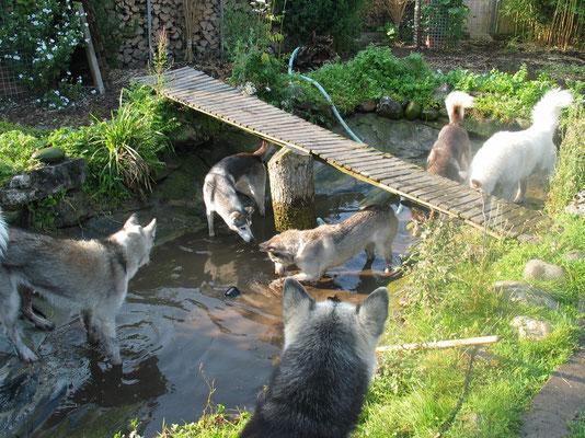 """Wenn das nicht toll ist; im seichten Schlick des Teichbodens herum waten - """"Watenmeer"""""""