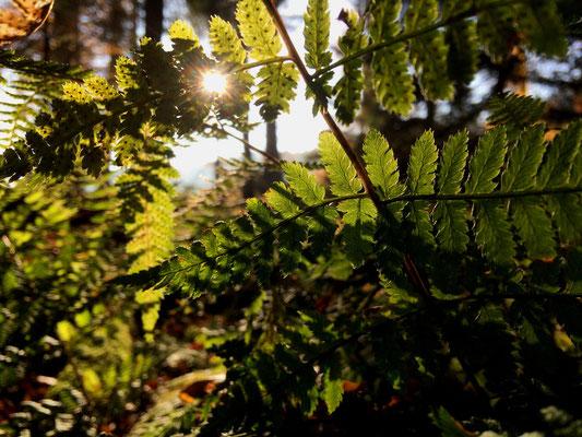 Die Herbstsonne dringt bis auf den modrigen Waldboden durch und zeichnet wunderbare Strukturen.