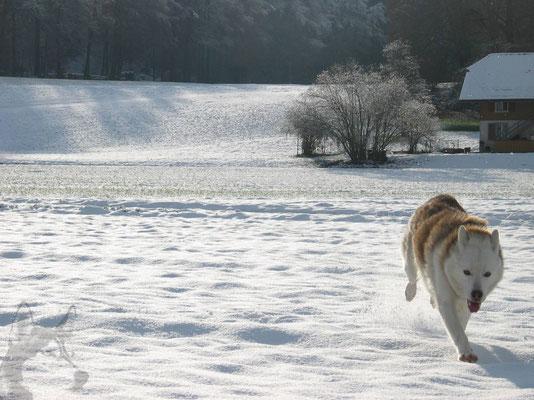 Ein freier Spurt, durch einen wunderschönen Wintertag