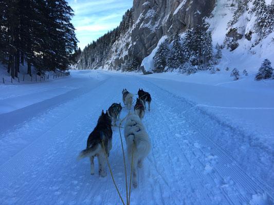 Aber auch noch auf dem Urnerboden, wo ich im Februar mein Gespann noch über den 8,5 km langen Trail führte.
