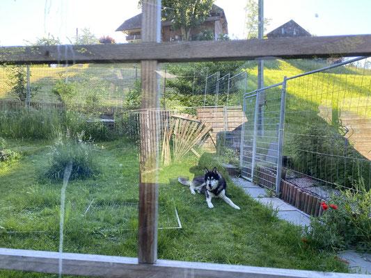 16 J und 224 T; bequem, ich kann im Garten liegen und sehe meine Menschen durch das Laubenfenster trotzdem
