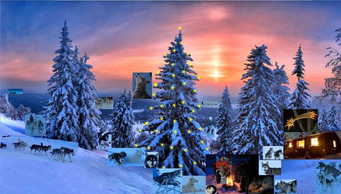 """""""Weihnachten nach Husky-Art""""  (Huskypost)"""
