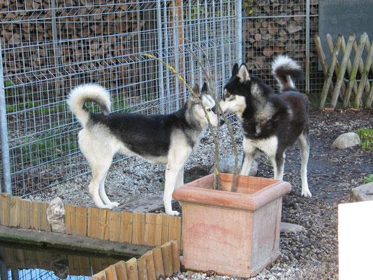 Kurzes Küsschen im Garten; Skeena und Merkur