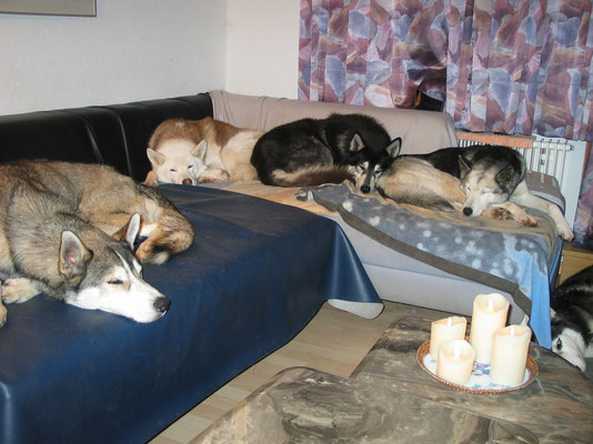 Eng aneinander den Winterabend geniessen; Zeus, Chenook, Merkur und Skeena