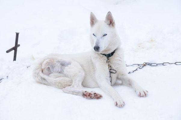 Snow, mit der Natur im Einklang (Foto A. Eberle)