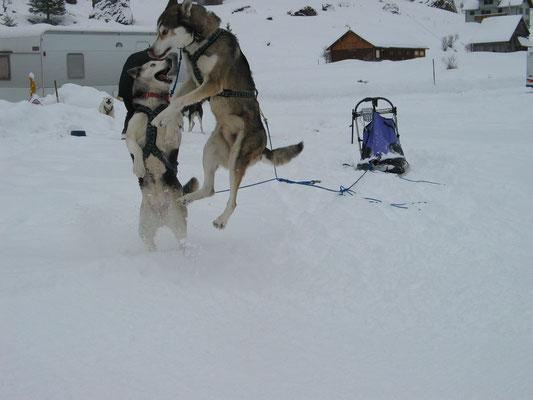 Zeus und Skeena im Adrenalin-Taumel vor dem Start