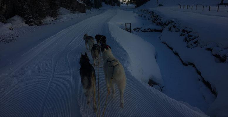 Rohn River - wir durchziehen das Tal in der Nacht, nur unser Hecheln ist zu hören und das Knirschen des Schnees unter den Kufen; unser Musher vertraut uns blind, er sieht den Trail nicht mehr, wir riechen ihn noch unter 50cm Neuschnee