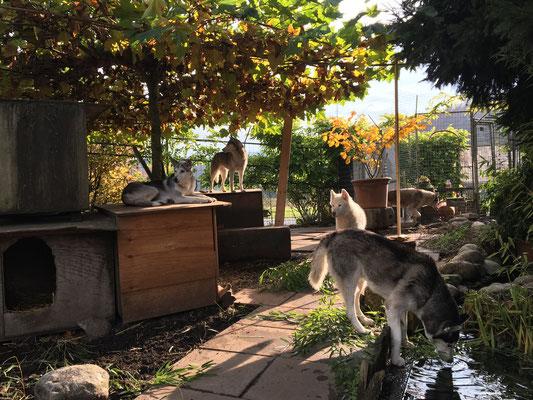 Blätter und Hunde prangen in goldenem Kleid, das ist die Zierde der herbstlichen Zeit.