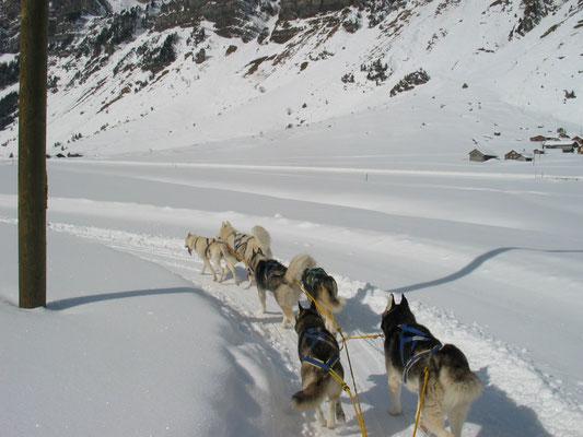 Auf dem Trail kennt Snow nur eines: Kopf runter und ziehen, wohin ihm Frauchen auch immer sagt.