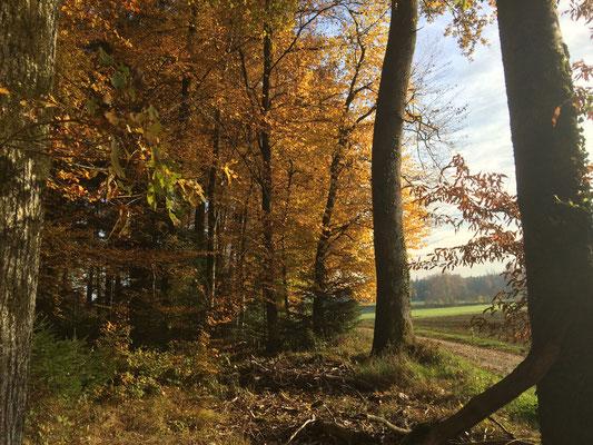 Im Herbst steht in den Wäldern die Stille, für die wir im Sommer keine Zeit haben...