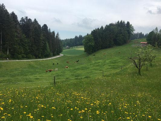 Durch Feld und Wald, über Stock und Stein...