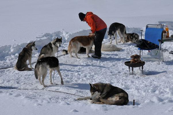 Kuschelzeit für Hunde und Frauchen (Foto A. Eberle)