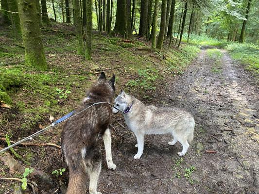16 J., 8 Mt., 16 T.; bin grad mit meinem Schätzi im Wald, und es braucht ein bisschen meine Unterstützung.