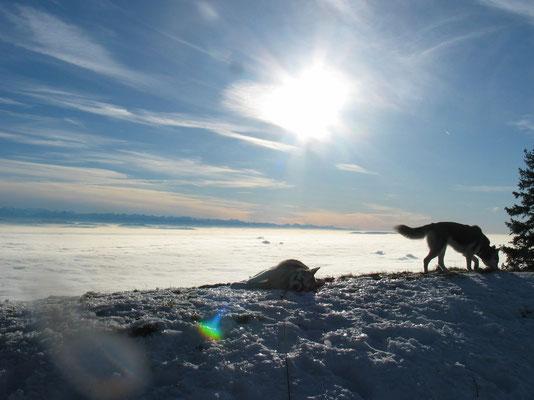 Wintersonne geniessen auf einer Hochgebirgstour über dem Nebelmeer