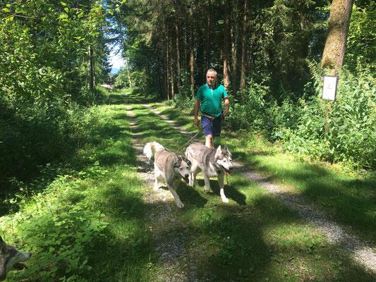 Amarok und Yukon ziehen Francesco durch den Wald...