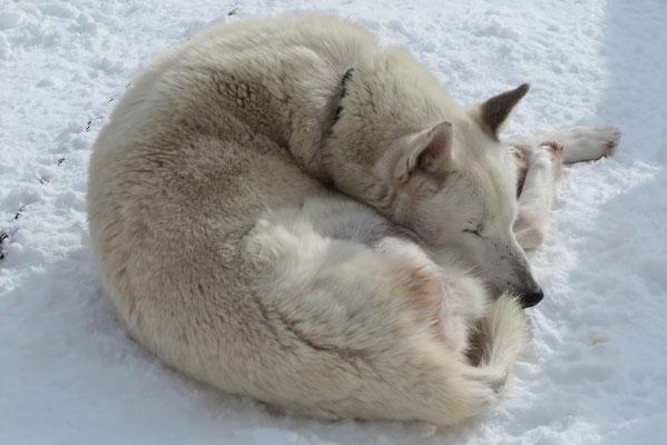 Träumen vom Norden, Polarlichtern und Urahnen...
