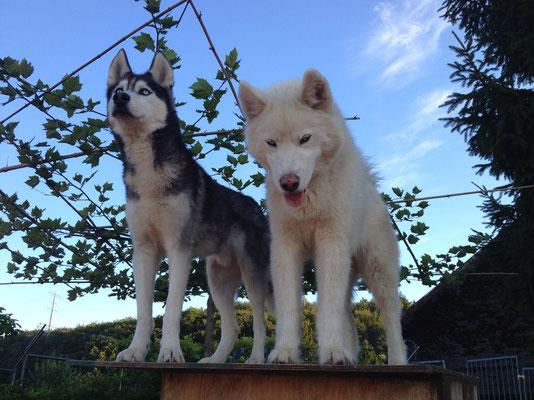 Amarok und Blizzard; Zwei coole Typen auf dem Flachdach ihres Hochhauses