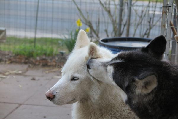 Blizzi und Freund Amarok