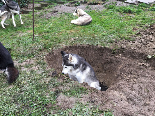 Was man da beim Buddeln in der Erde so alles findet, mich überkommt fast das Kotzen... Und zu schmal ist das Loch auch immer noch, also noch mal ran an die Spaten!