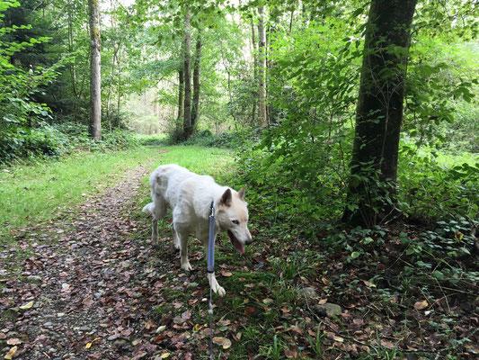 Auf dem Rückweg durch lichten Laubwald...